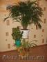 подставки для цветов из дерева