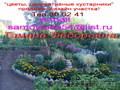 цветы,  декоративные растения - продажа,  дизайн участка!