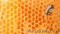Продаю мед оптом в Киргизии много