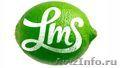 Профессиональные маркетинговые и рекламные услуги